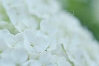 花の写真・画像素材[95400]