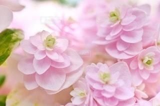 花の写真・画像素材[95404]