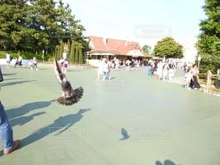 鳩の影の写真・画像素材[2475668]
