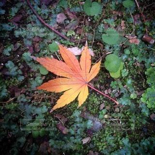 自然の写真・画像素材[107692]