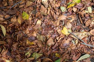 森林の中の落葉 秋のイメージの写真・画像素材[2500796]
