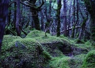もののけの森の写真・画像素材[2478530]