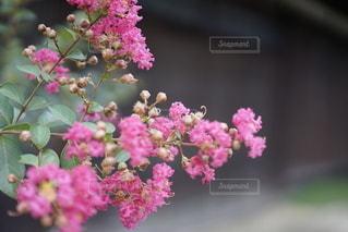 自然の写真・画像素材[2478610]