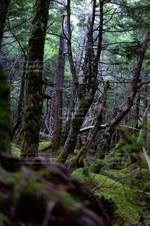 自然の写真・画像素材[2478639]