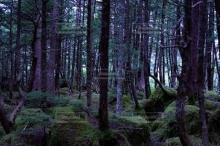 自然の写真・画像素材[2478641]