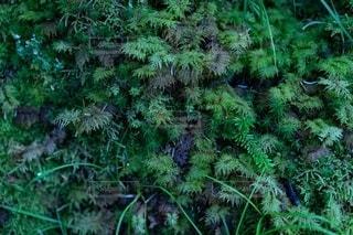自然の写真・画像素材[2478643]