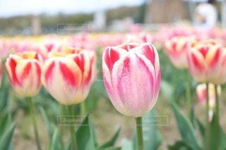 花のクローズアップの写真・画像素材[3089134]