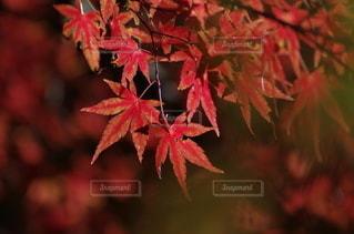 赤く灯るの写真・画像素材[2489742]