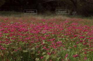 鮮やかな赤の写真・画像素材[2489739]
