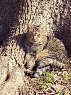 うとうとする猫の写真・画像素材[2667537]