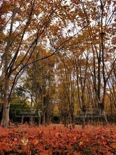 深まる秋の写真・画像素材[2721178]