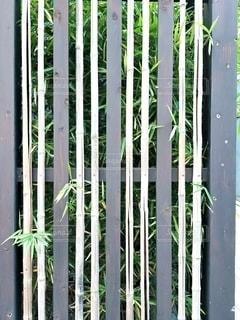 雰囲気の良い柵の写真・画像素材[2843619]