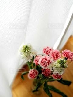 窓辺の花の写真・画像素材[3127023]