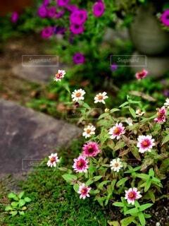 可愛い花壇の写真・画像素材[3739626]