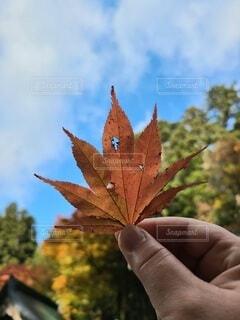 秋みーっけの写真・画像素材[3878544]