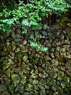 美しい石垣の写真・画像素材[4574382]