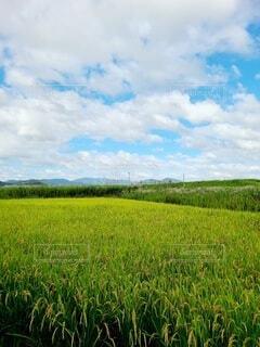 田んぼの風景の写真・画像素材[4826375]