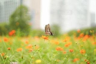 花のクローズアップの写真・画像素材[2496146]