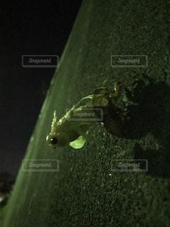 昆虫の写真・画像素材[2483077]