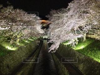 お花畑の写真・画像素材[96046]