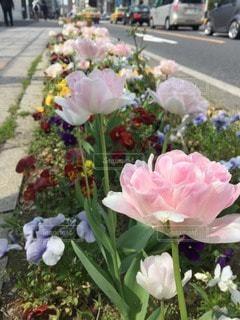 花の写真・画像素材[96305]