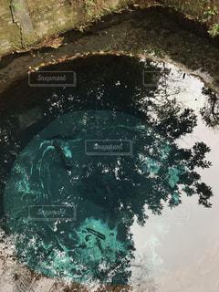 柿田川湧水の写真・画像素材[2654367]