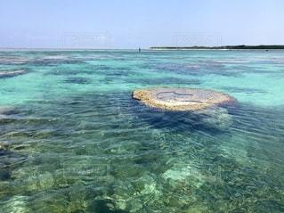 石垣島・白保の海でシュノーケルの写真・画像素材[2483672]