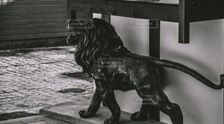 百獣の王の写真・画像素材[2483849]
