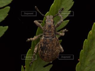 昆虫マクロの写真・画像素材[2483962]