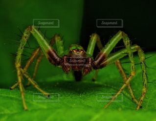 昆虫マクロの写真・画像素材[2490759]