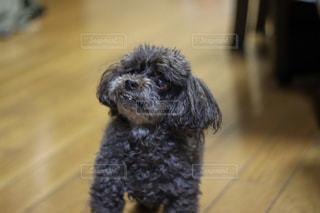 犬の写真・画像素材[2485907]