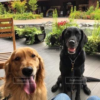 犬の写真・画像素材[95756]