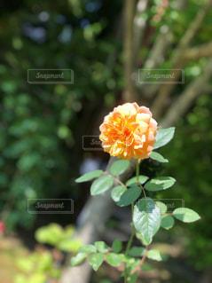花の写真・画像素材[2485124]