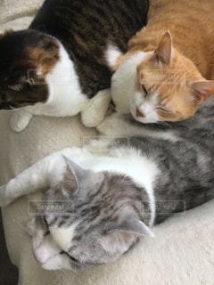 猫の写真・画像素材[2485226]