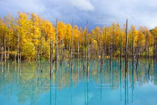 紅葉が見頃の青い池の写真・画像素材[2496021]