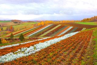秋の色に染まる四季彩の丘の写真・画像素材[2497657]