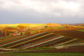 秋の色に染まる四季彩の丘の写真・画像素材[2497684]