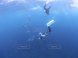 御蔵島ダイビングの写真・画像素材[2490215]
