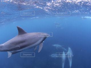 イルカの群れの写真・画像素材[2490216]