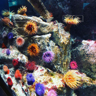 水中の美しさの写真・画像素材[2489075]