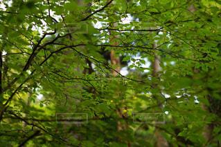 森林の木漏れ日の写真・画像素材[2708347]