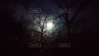暗い部屋の木の写真・画像素材[3083753]