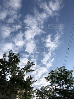 空と木の写真・画像素材[2704111]