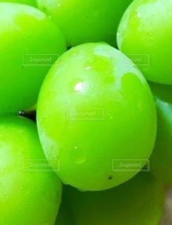 緑のぶどうの写真・画像素材[2704119]