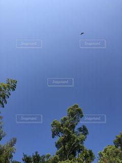 空を飛んでいる鳥の写真・画像素材[2722485]