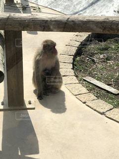 座っている猿の写真・画像素材[2738672]