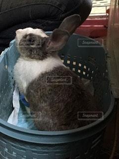 癒やし系動物ウサギ - No.96068