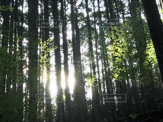 森の中の木の写真・画像素材[3211230]