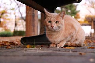 車の上に座っているオレンジと白の猫の写真・画像素材[2492792]