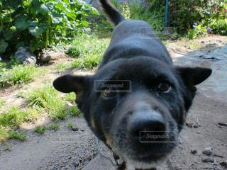 亡き愛犬ルル。の写真・画像素材[2492839]
